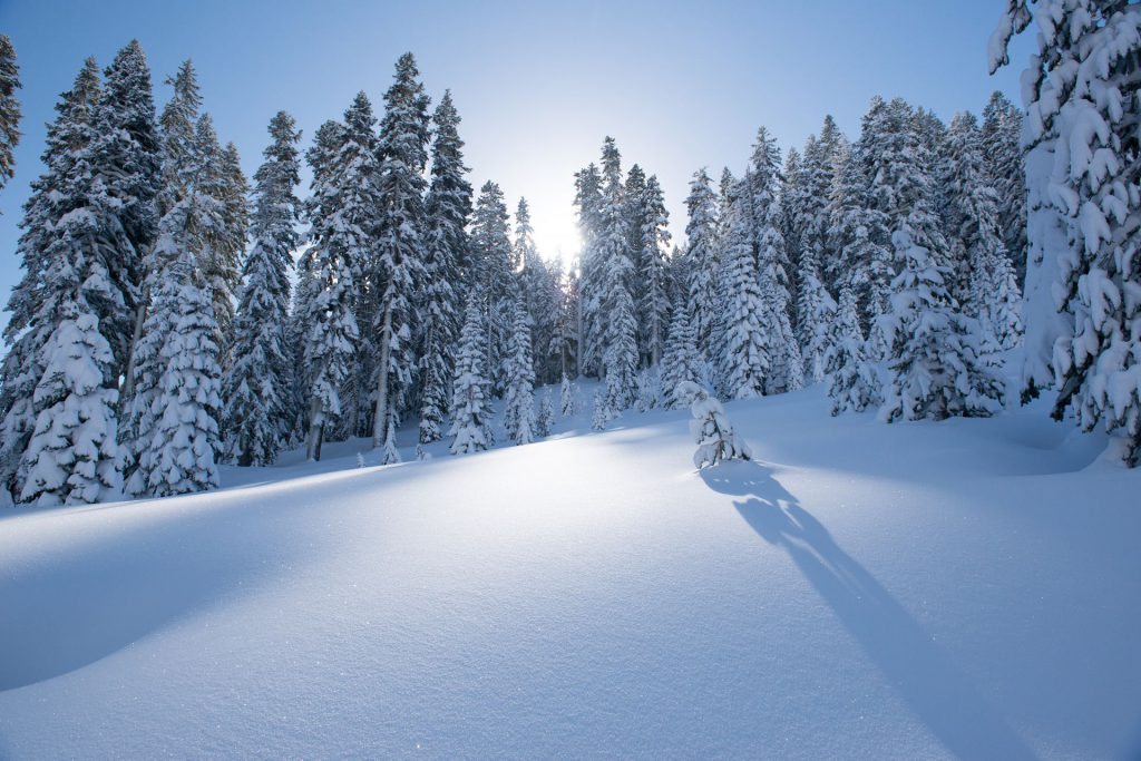 perfect snow coating
