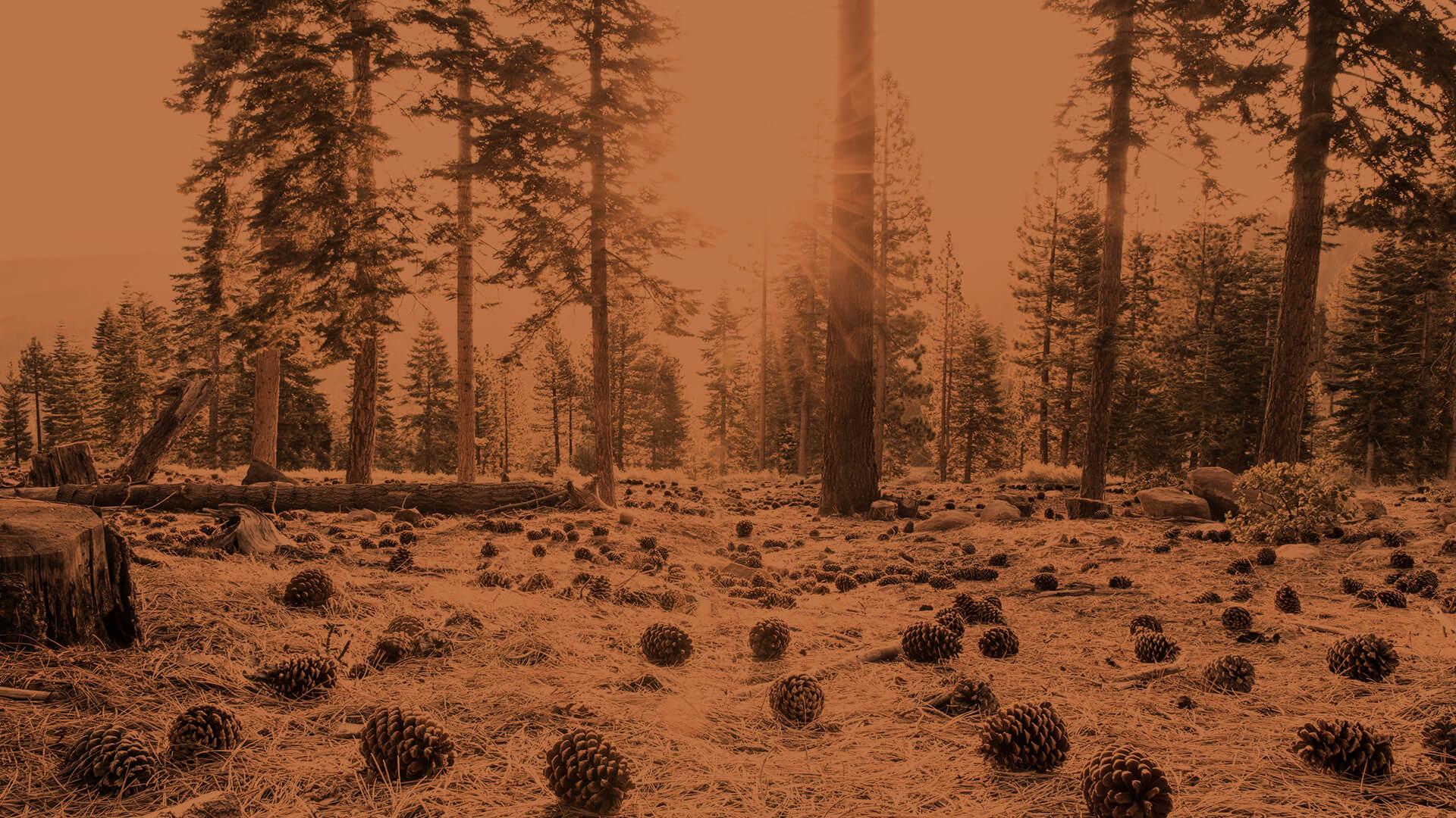 m25 copper landscape