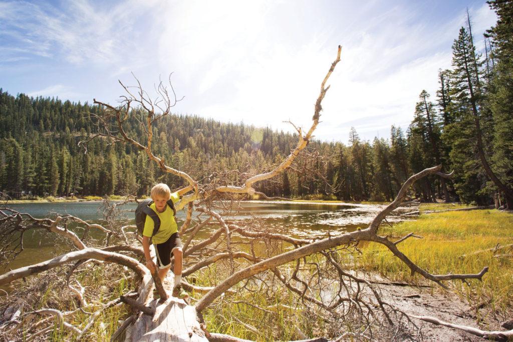 boy-hiking-tree-tahoe